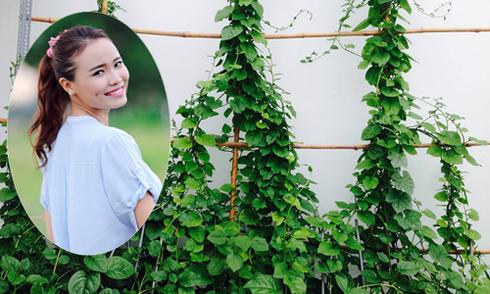 Hot girl Sài thành trồng rau sạch phủ xanh ngôi nhà phố