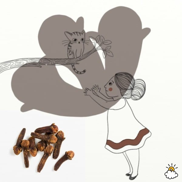 10-loai-thao-duoc-trong-bep-co-tac-dung-chua-benh-tuyet-voi-4