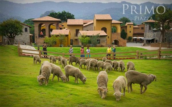 primo-piazza-italy-thu-nho-ngay-tai-thai-lan