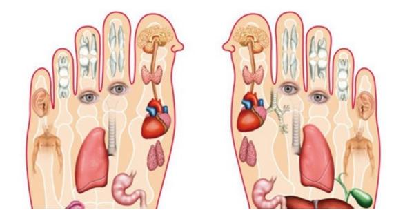 Bàn chân chứa rất nhiều dây thần kinh, liên quan mật thiết đến các bộ phận trong cơ thể.