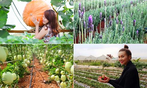 'Tour vườn tược' có một không hai ở Đà Lạt