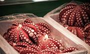Đồ tươi ngon ở khu chợ cá lớn nhất thế giới