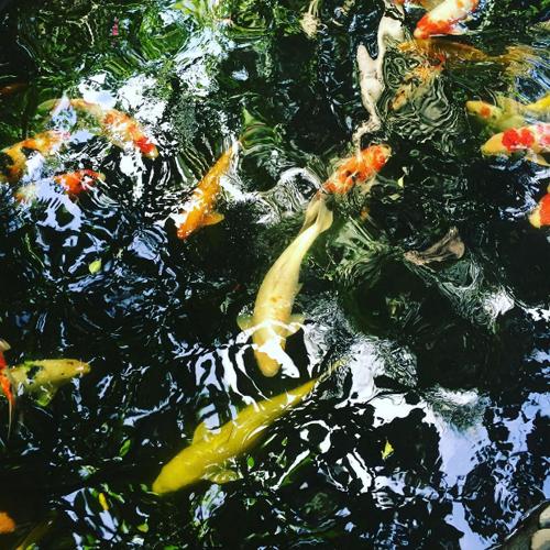 tan-huong-ky-nghi-2-9-cung-gia-dinh-tai-vuon-xoai-2