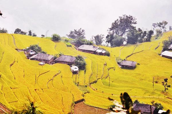 3 cung đường ngắm mùa lúa vàng ở miền núi phía Bắc