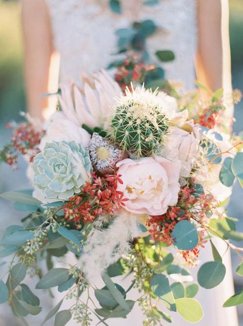 25-flowers-cactus-and-succulen-7997-5588