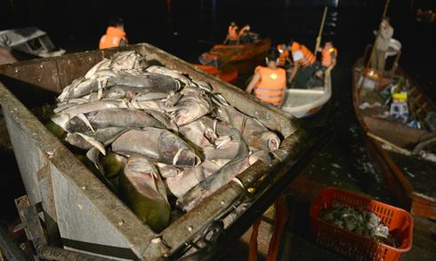Trắng đêm 'giải cứu' cá hồ Tây