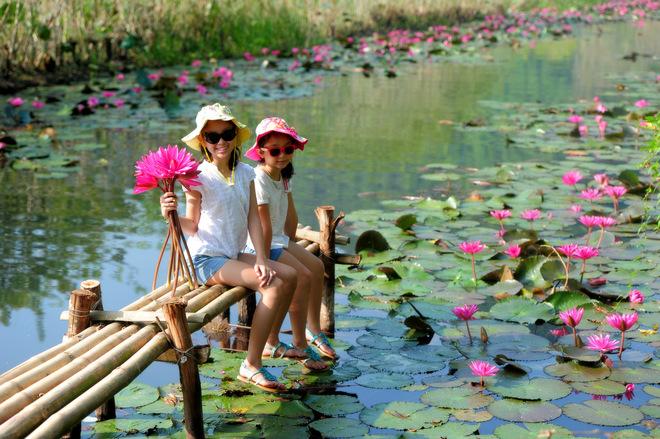 Hoa súng chùa Hương khoe sắc dưới nắng thu