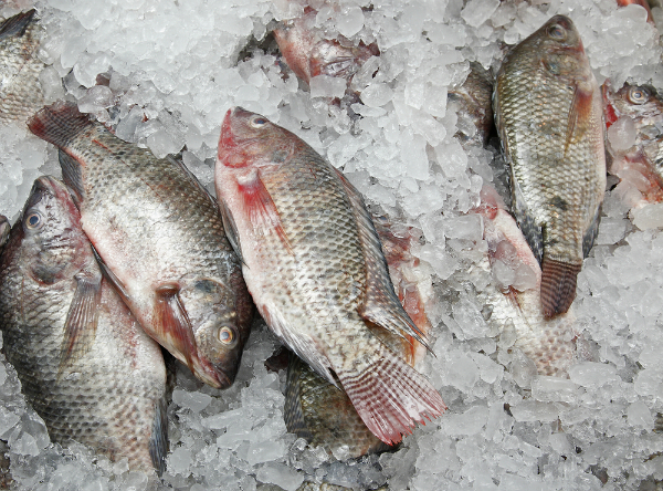 Ảnh: thehealthyfish