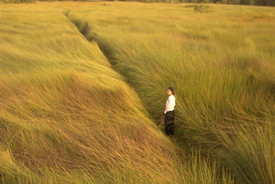 Miền Tây thân thương qua các bộ phim Việt nổi tiếng
