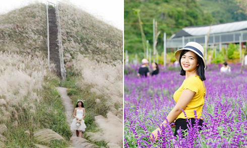 Hai địa điểm chụp ảnh hoa cỏ đang hấp dẫn du khách