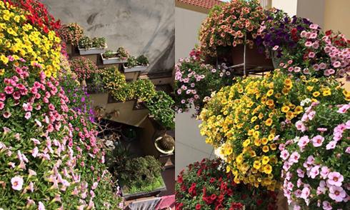 Ngôi nhà ngập tràn hoa triệu chuông của mẹ 8X Quảng Ninh