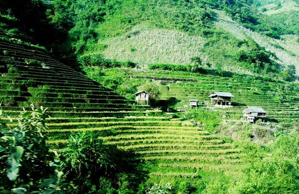 Ngoài ra, dù đã hết mùa lúa chín, nhưng những thửa ruộng bậc thang nơi đây vẫn còn có sức quyễn rũ đối với du khách. Trên nhiều đoạn đường bạn có thể ngắm nhìn đồi núi hiện lên màu vàng