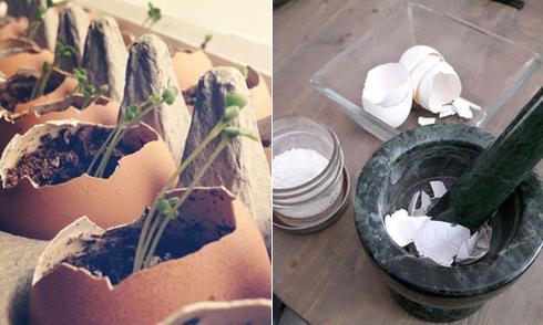9 cách tận dụng vỏ trứng cho bà nội trợ và thợ làm vườn