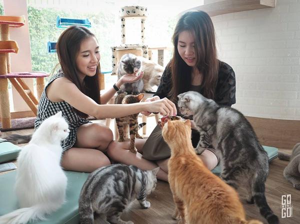 10-quan-ca-phe-thu-cung-cho-du-khach-den-bangkok-1