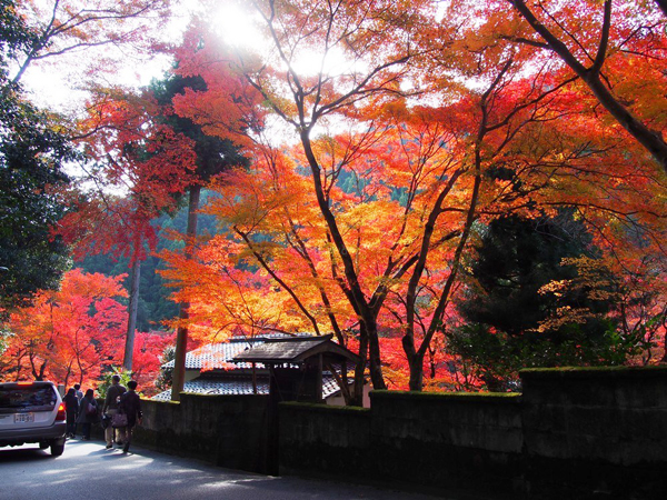Autumn-Leaves-in-Kyoto-Genko-a-2203-1515