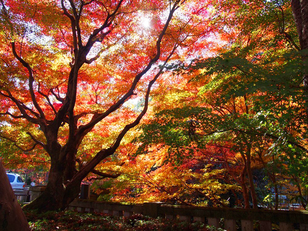 Autumn-Leaves-in-Kyoto-Genko-a-5064-6791
