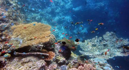 chuyen-di-maldives-cua-me-don-than-ung-thu-va-con-trai-9
