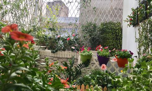 Bà mẹ Hà Nội dành 3 năm biến ban công thành 'vườn cổ tích'