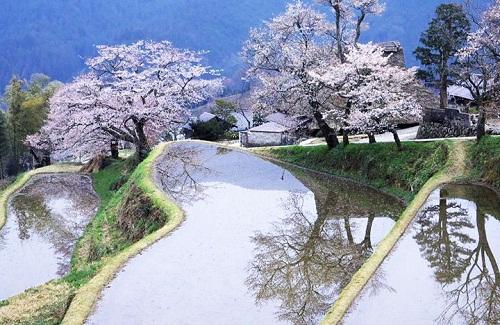 Trải nghiệm du xuân đầu năm tại Nhật Bản