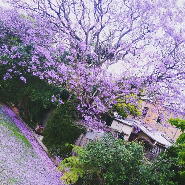 Những địa điểm du lịch gây sốt nhờ cánh đồng hoa