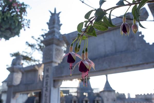 Ở khu tâm linh, hoa mộc vẫn luôn toả ngát hương thơm ngọt dịu đón du khách khám phá không gian thiền thanh tịnh.