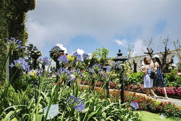 Với mong muốn đem về Bà Nà Hills ngày càng nhiều loài hoa mới, mang tới cho du khách những trải nghiệm tuyệt vời nhất, khu du lịch đã dành nhiều tâm huyết để nghiên cứu, chăm sóc thành công cả những giống cây đỏng đảnh, khó trồng như loài hoa xứ nóng  mười giờ Úc, hay arapang, mai địa thảo, địa lan...