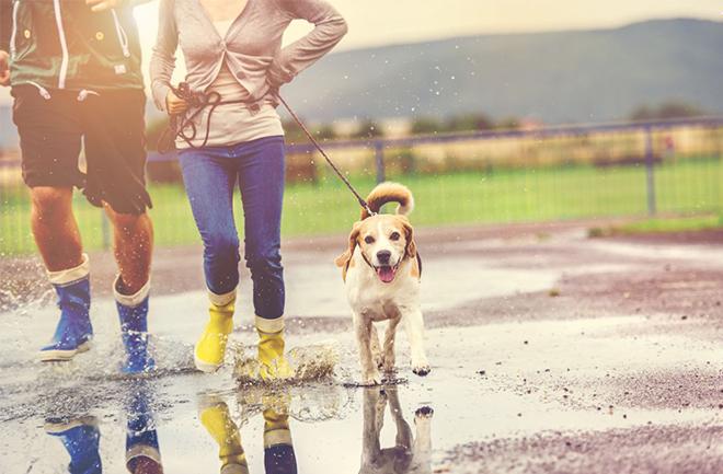 6 lý do khiến bạn muốn dành ra ít phút đi bộ mỗi ngày