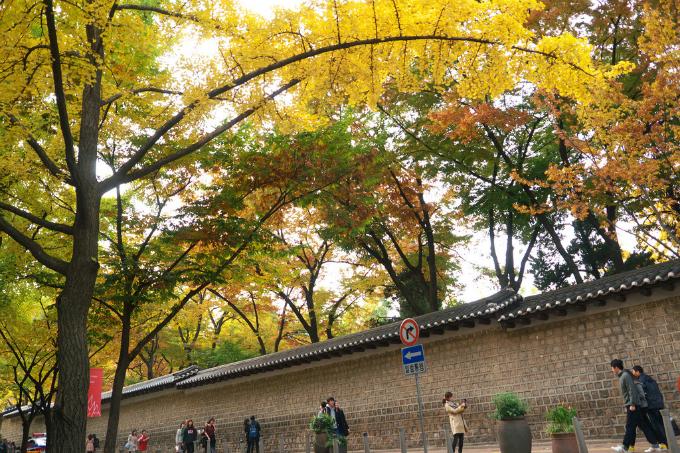 Kéo dài hơn 900m từ cung điện Deoksu tới nhà hát Jeongdong, con đường Deoksugung có rất nhiều di tích văn hóa và bảo tàng cho du khách ghé thăm.