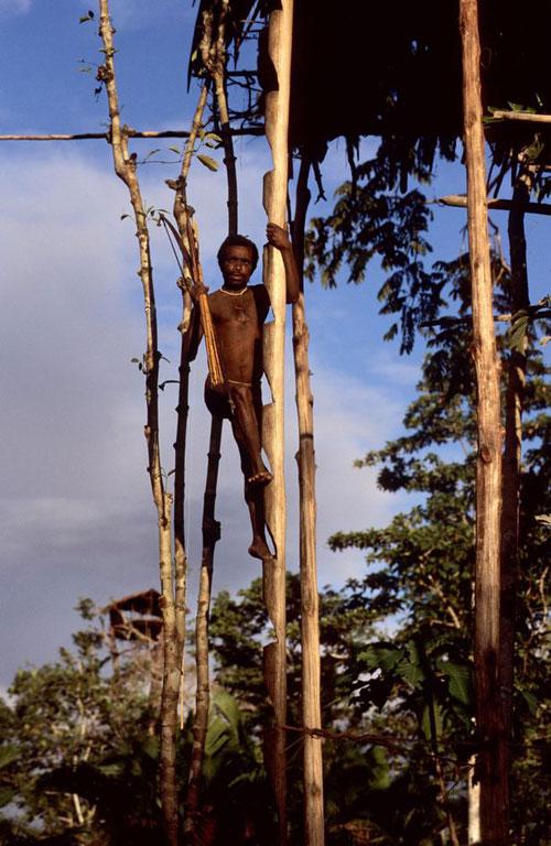 bo-toc-dung-nha-tren-cay-tach-biet-khoi-the-gioi-loai-nguoi-o-indonesia