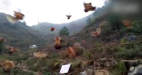 nhung-con-ga-biet-bay-o-trung-quoc