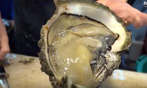 Ghé chợ hải sản ở Nhật thưởng thức món hàu sống khổng lồ