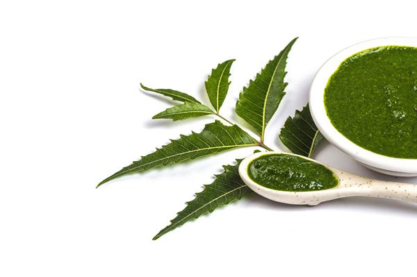 Lá neem nguồn dược liệu quý đang được giới trẻ tin dùng.