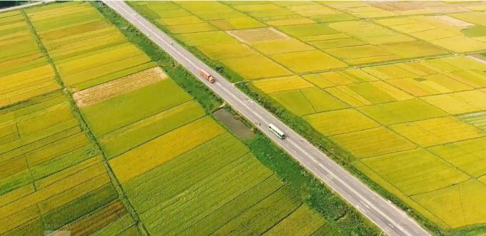Hoa vàng cỏ xanh ở Thăng Bình, vùng đất mới tinh trên bản đồ du lịch