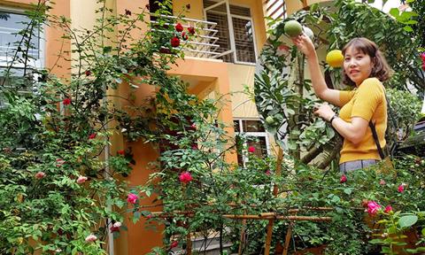 Biệt thự phủ kín hoa hồng của nữ kế toán ở Hưng Yên