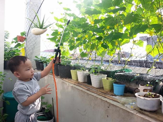 Ban công nhà anh Biển chỉ rộng gần 4 m2. Anh sử dụng nhiều chậu treo, lắp giàn bán canh thủy để trồng được nhiều rau trên diện tích khiêm tốn ấy.