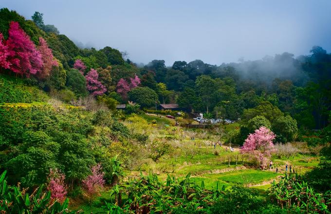 Tết này, dạo chơi ở thung lũng thập lý đào hoa - 9