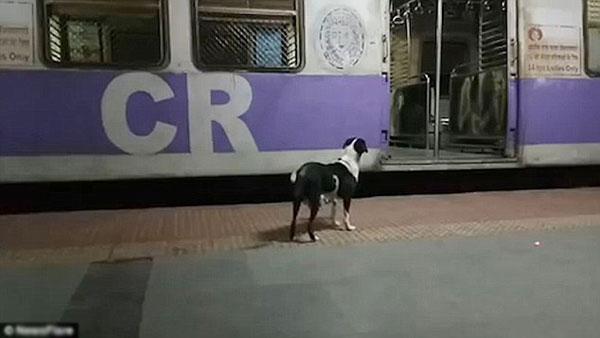 Con chó nhìn vào từng toa tàu rồi tiếc nuối chạy theo thêmmột đoạn nữa khi tàu chuyển bánh.