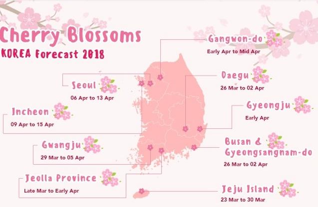 Dự báo hoa anh đào nở ở Hàn Quốc và Nhật Bản năm nay