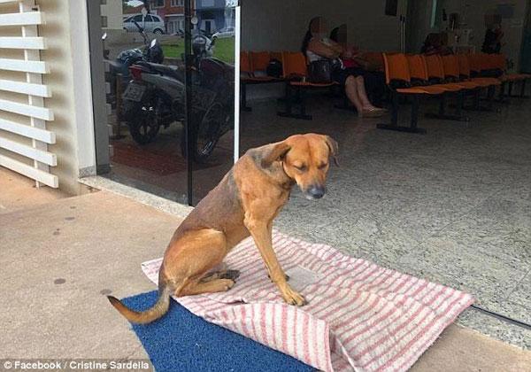 Con chó quyết không chịu rời đi vì vẫn còn mong đợi chủ quay trở lại.
