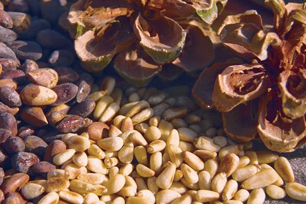 chất béo trong nhân hạt thông phần nhiều là axit béo không bão hòa có lợi cho cơ thể cùng nhiều protein, vitamin và chất khoáng.
