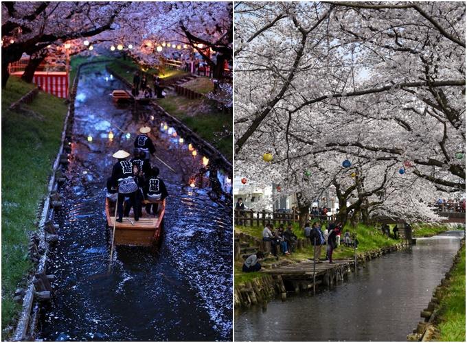 Những điểm ngắm hoa anh đào ban đêm đẹp nhất Nhật Bản - 1
