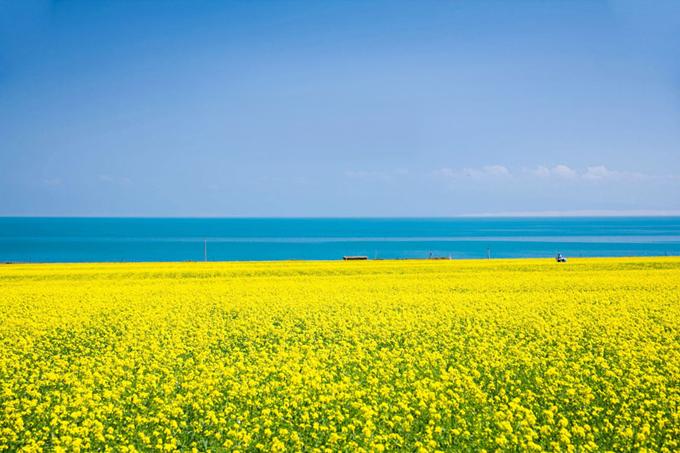 Hồ Thanh Hải vào mùa hoa cải tháng 7-8.
