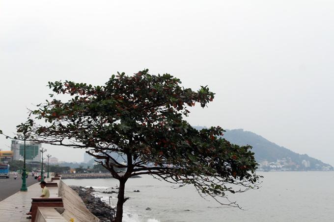 5 điểm chụp hình đẹp quên sầu ở Vũng Tàu