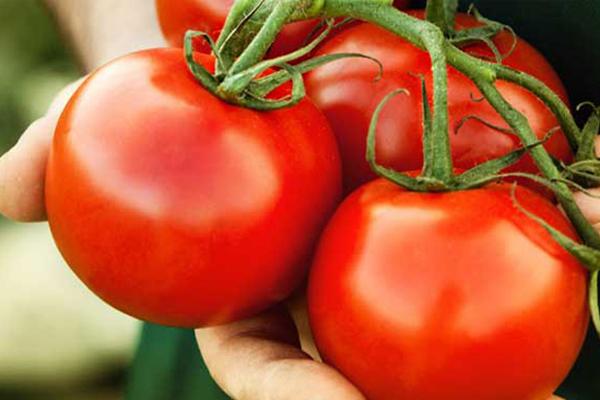 Thêm cà chua vào các món ăn Cà chua có hàm lượng cao lycopene có tác dụng chống lại quá trình glycation. Loại quả này còn rất giàu dưỡng chất và vitamin, ngoài thêm vào các món ăn còn có thể dùng trực tiếp để làm đẹp da.