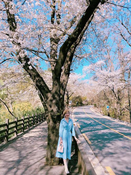Theo chân Chi Pu ngắm con đường hoa anh đào đẹp ngất ngây ở Seoul