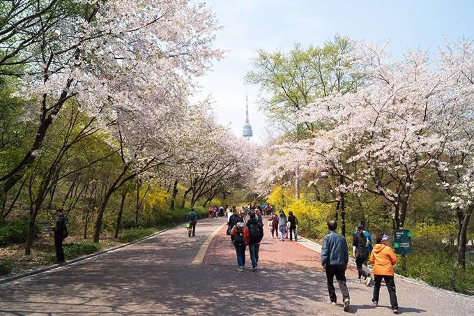 Theo chân Chi Pu ngắm con đường hoa anh đào đẹp ngất ngây ở Seoul - 6