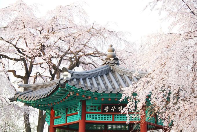 Theo chân Chi Pu ngắm con đường hoa anh đào đẹp ngất ngây ở Seoul - 7