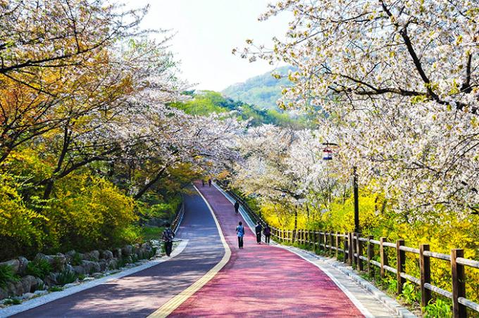 Theo chân Chi Pu ngắm con đường hoa anh đào đẹp ngất ngây ở Seoul - 9