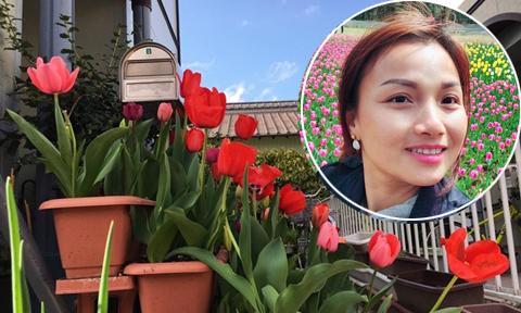 Thềm nhà phủ kín sắc hoa tulip của mẹ Việt tại Nhật