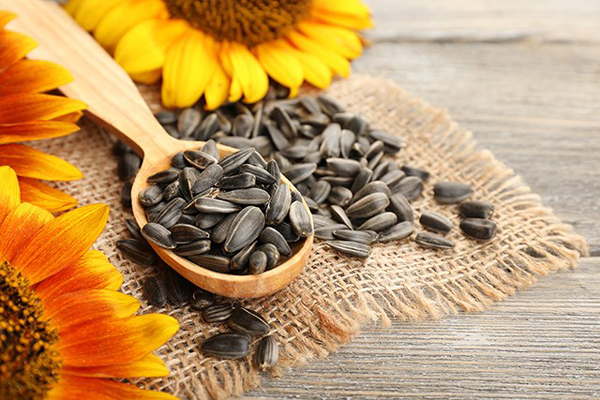 Hạt hướng dương giúp no lâu, là món ăn vặt giúp bạn không lo tăng cân.